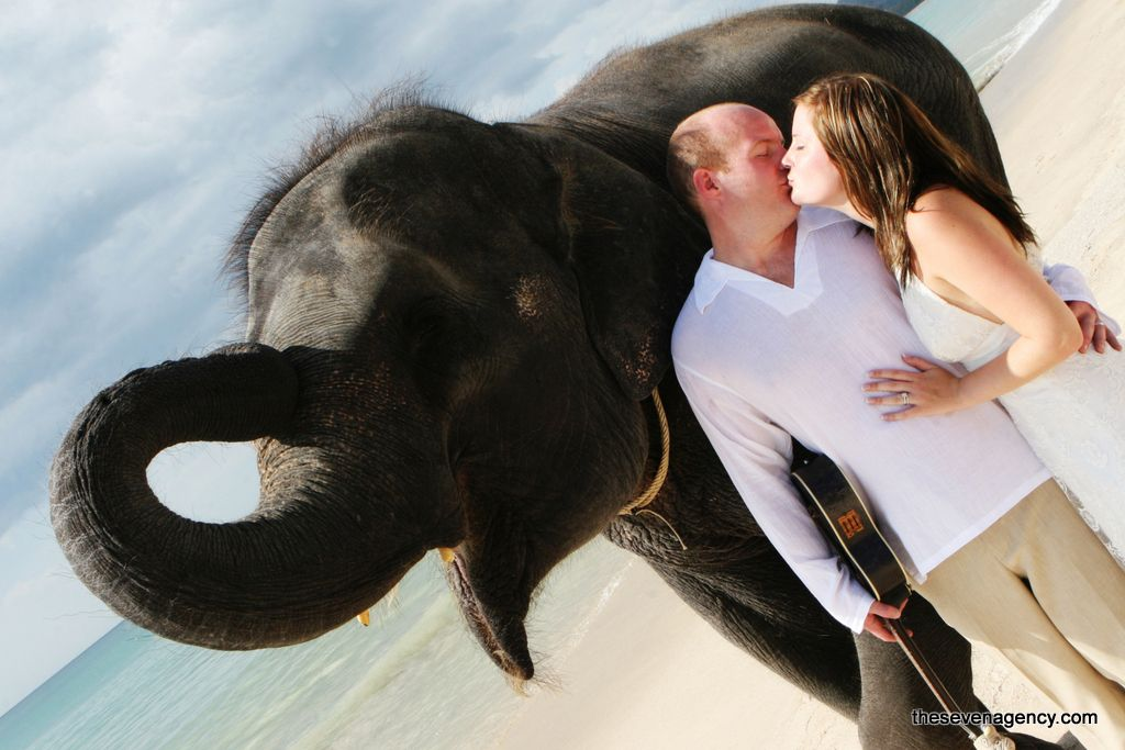 Elephant wedding - 05-shutterstock_28423225.jpg
