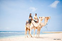 Photosession program Prewedding photoshoot with camels