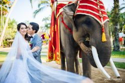 Photosession program Prewedding photoshoot with elephants