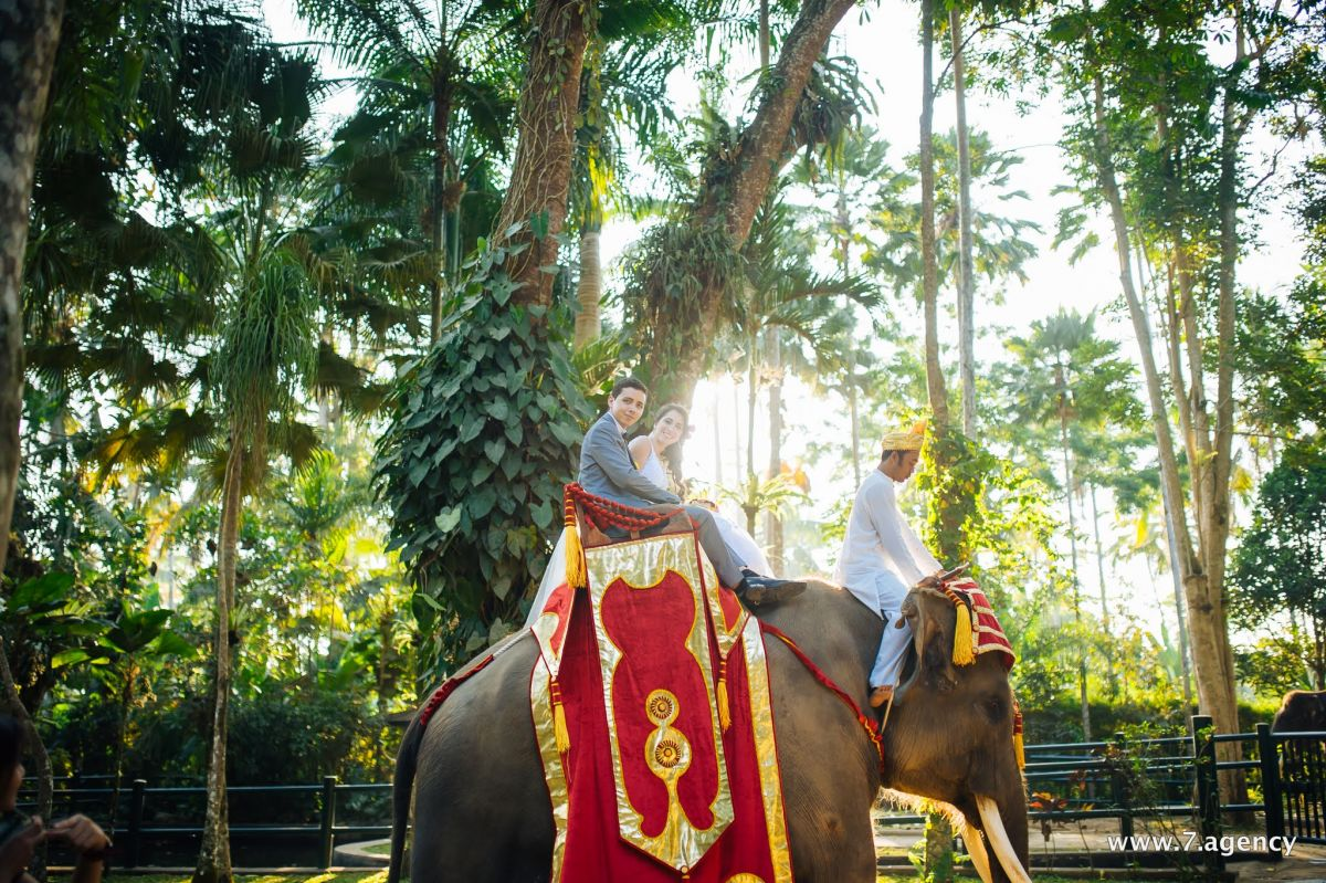 Exotic elephant wedding - AVA_5464.jpg