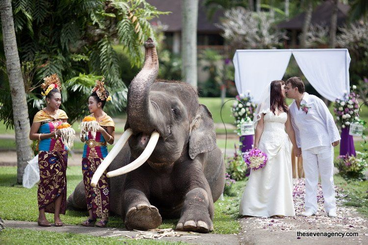 Exotic elephant wedding - IMG_5229.jpg
