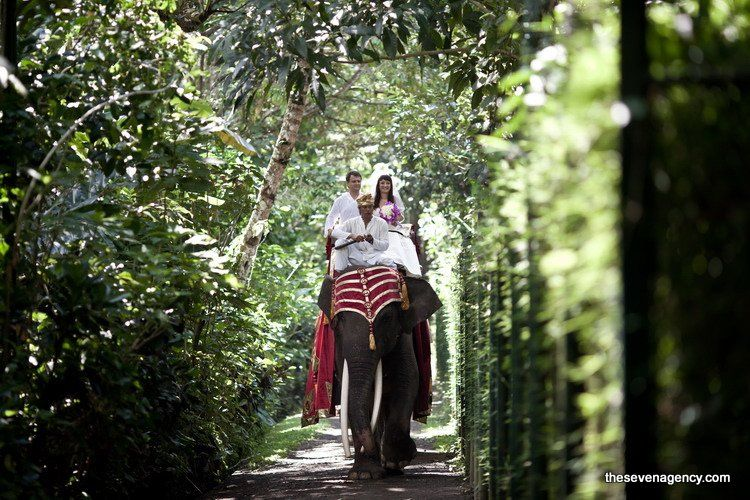 Exotic elephant wedding - IMG_5161.jpg