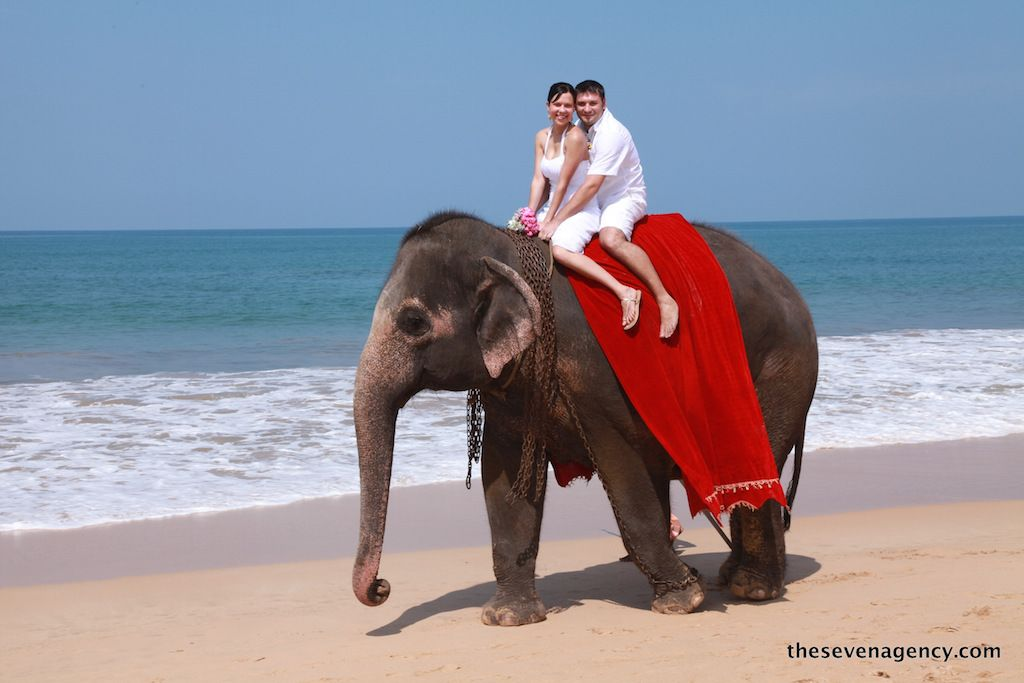 Elephant wedding - elephant (2).JPG