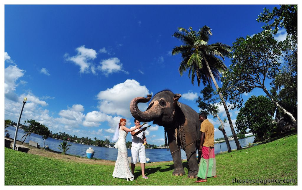 Elephant wedding - DSC_0116.JPG