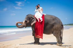 add-ons for ceremony Sri Lankan elephant